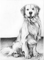 Dog Commission 6 by jucyjesy82