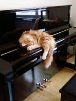 Cesar Sleeping on Piano by 116802