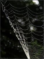 Beaded Web by mydigitalmind