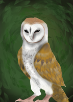 and Owl for Alize by Panda-child