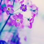 Bliss by nhuthanh