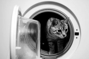 cat in the washing machine by Pomalowana