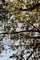 Feuilles d'automne by AnAntichrist11