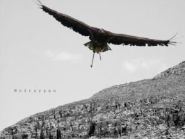 Sika in Flight B+W by moirsypan
