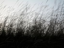 Shadows of Grass by paploothelearned