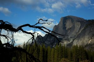 Half Dome with Snag by louieschwartzberg