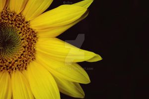 Yellow by xTive