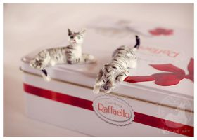 Raffaello cats by Keila-the-fawncat
