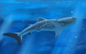 Whale Shark by Katolin