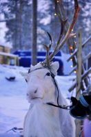 Rudolf. by Fiedka