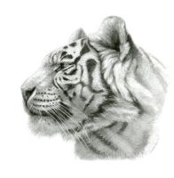 White Tigress - profile by sschukina