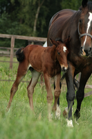 Foal stock 116 by Bundy-Stock
