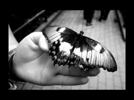 Butterfly At Melb Zoo by ryano292