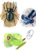 Bugs and color studies by MarcoGiorgianni