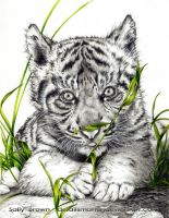 Tiger Cub by DetailsMatter