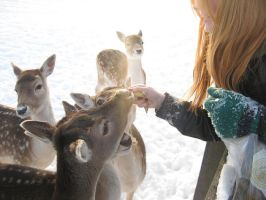 Feeding the deer by Maquenda