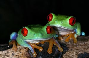 Two frogs by AngiWallace