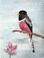 Elegant Trogon Watercolour by theworldisbehindus