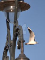 Lamp with gulls around 1 by Skyrover