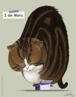 I am Maru. by CharReed