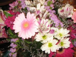 pink flowers by shortcakesnail-Stock