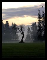 Witch Tree by 12monthsOFwinter