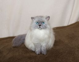 Needle felted himalayan cat by amber-rose-creations
