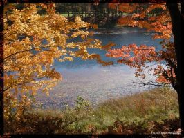 Fall Colors 2 by Timm45