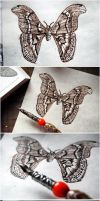 Atlas Moth by lonesomeaesthetic