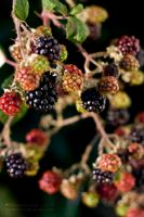 Berries by ShutterChef