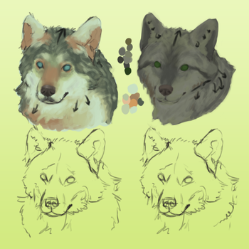 30. More realistic wolf sketches by AnimalCogitantium