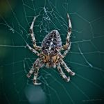 Web Mistress by BenoitJWild