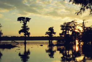 shadows on the bayou by DramaQueenB