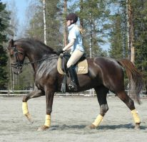 Dressage -more than a sport by TazGold-Equines