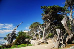 17 Mile Drive 4 by ajithrajeswari
