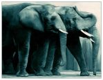Elephants digital painting 2014-08-19 by Brian-Athey