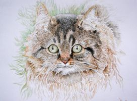 Cat Watercolor by Vincik