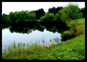 Pond by insectualstock