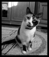My cat BW by AlexBlood