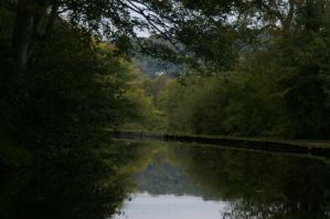 calverley woods by the canal by rainbowphotos