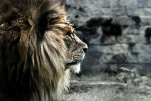 King by h-e-photography