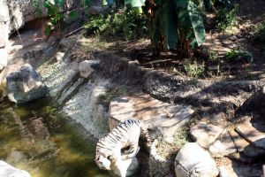 White Tiger 4 by cynstock