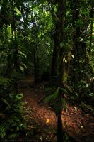 La Selva Trail by robbobert