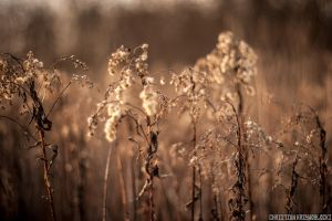 Fields Of Gold by Krzywoblocki