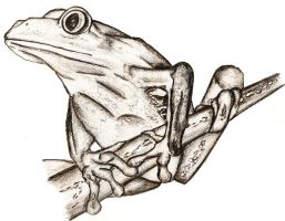 Frog Sketch by RSImpey