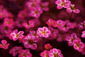 Floral Nation by nibbia