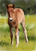 Horse Foal by Avorage