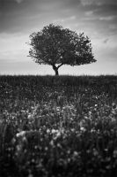 einsamer Baum by man-of-faith