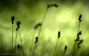 Grass Silhouettes by abutre