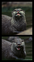 Otter Fun by FSGPhotography